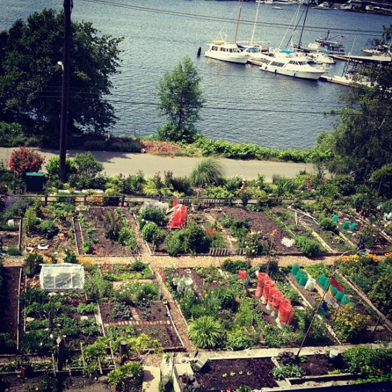 P-Patch garden below Little Water Cantina